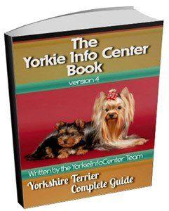 Yorkie Pregnancy | Yorkshire Terrier Information Center