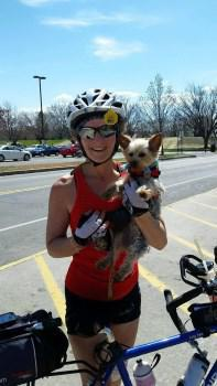 Yorkie socialized to bicycle