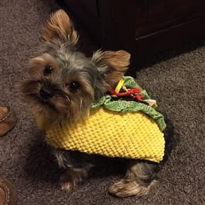 Dog Halloween Outfits