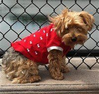 Yorkshire Terrier Red Sweater