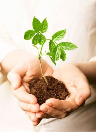 man holding soil in his hands and a plant growing