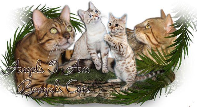 Angels I Am Bengal Cats
