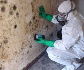 mold testing and free mold inspections