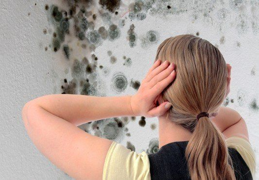 mold damage and removal, free mold inspections
