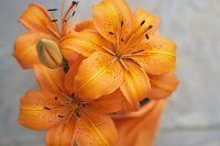 planning an affordable memorial service in Staten Island orange flowers