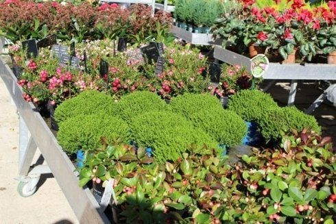 proposte Giardini