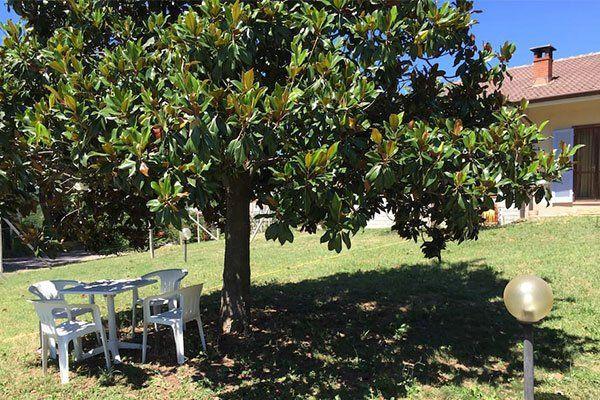 un prato con un albero e un tavolo con delle sedie