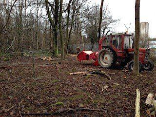 Tree maintenance in progress