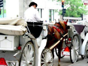 Quality horse drawn services