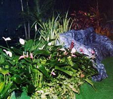 Professional arrangement of plants, landscaping in Haleiwa