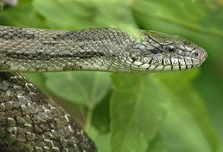 New Jersey Attractions - Snakes