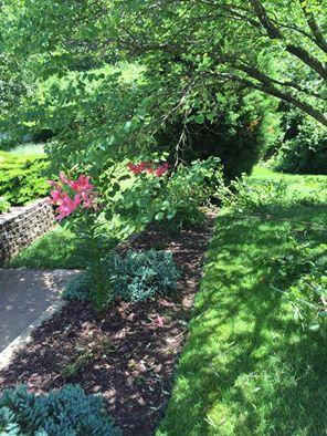 Beautiful big green garden