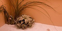 piante finte in un angolo della stanza di un centro estetico