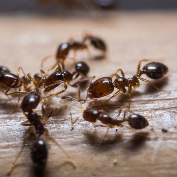 Pest Control Hamden, CT