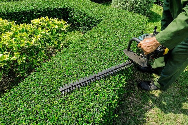 Hedge trimming and maintenance