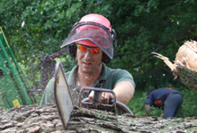 Fully trained arborists