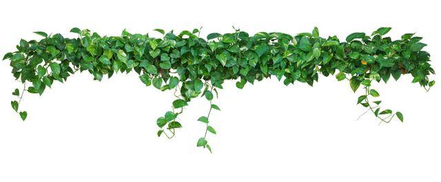 piante esterne