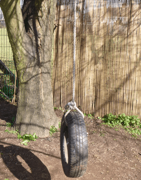 tyre tied to the tree