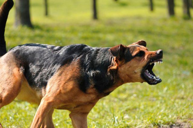 Dog Bite Injury Attorney Hobbs, NM