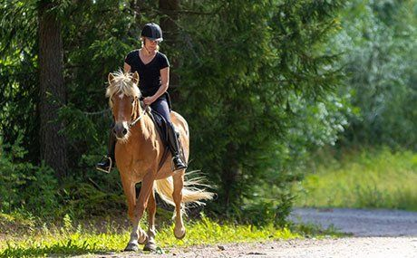 Guided Trail Rides   West Babylon, NY   Babylon Riding Center