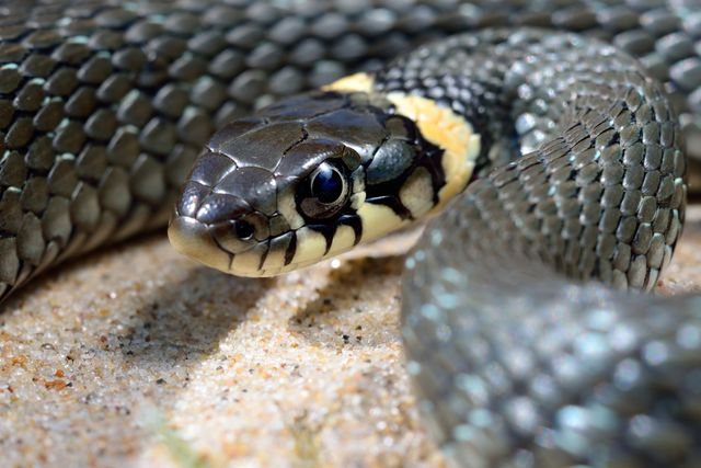 Snakes are another common problem we have the expertise to deal with