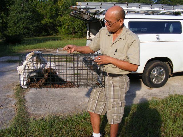 Wildlife Removal in Dothan, AL