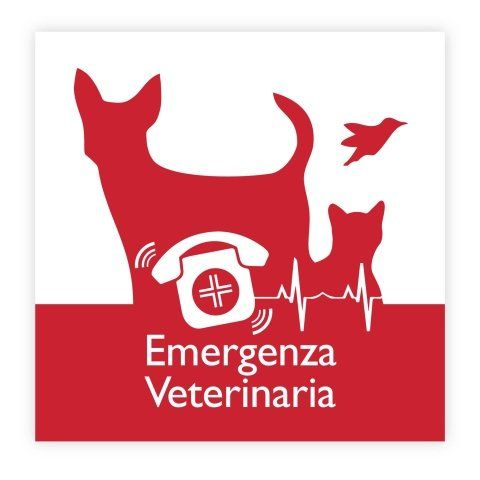 emergenza veterinaria a torino