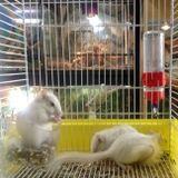 scoiattoli in una gabbia