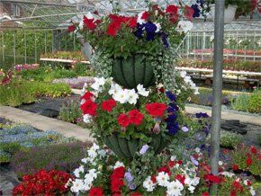Some of the beautiful flowers grown at Dunkirk Horticultural Nursery