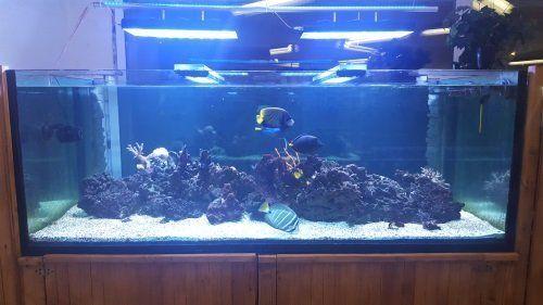 un acquario con dei pesci