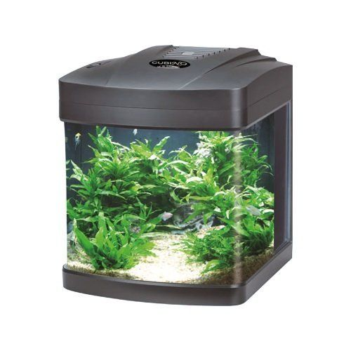un acquario con delle piante