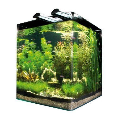 delle piante in un acquario