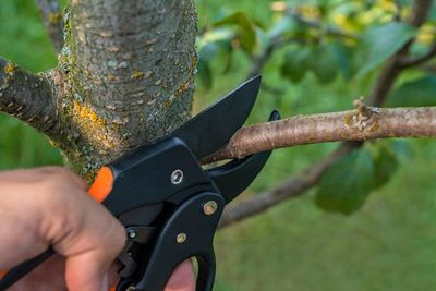 Pest & Disease | Middleburg, FL | Absolute Tree & Stump, Inc.