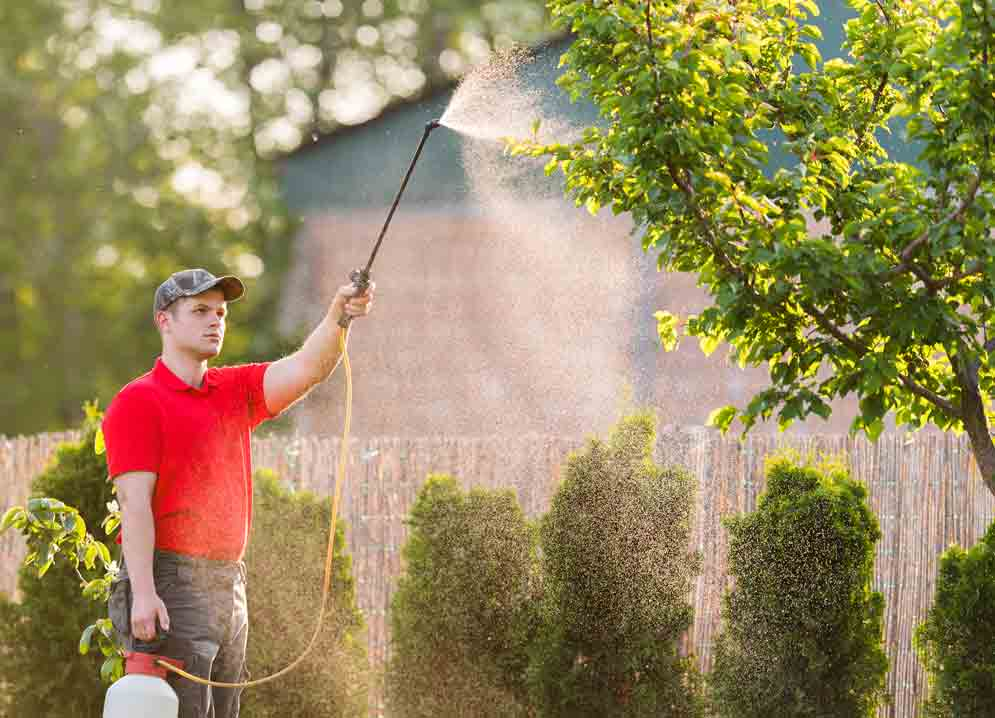 3 Tree Care Mistakes You Might Make