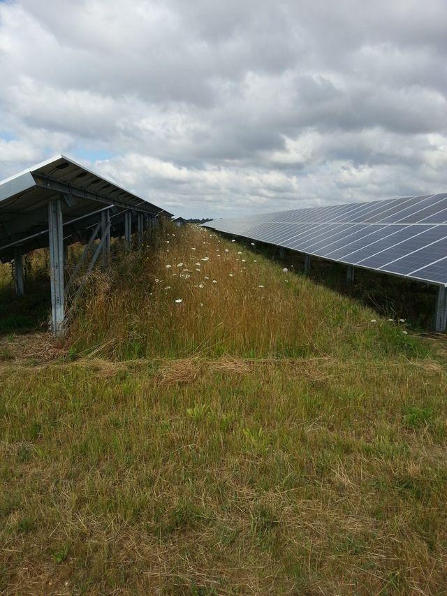 solar farm panels before grass cutting