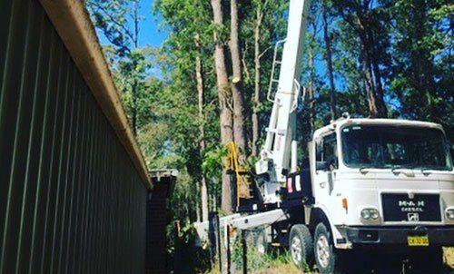 tree servicing truck