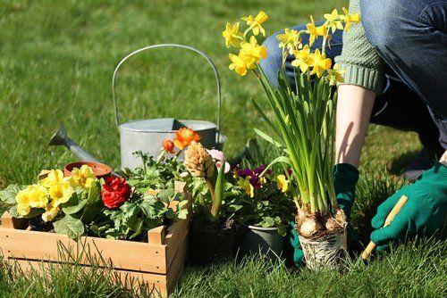 Giardiniere al lavoro mentre mette a dimora piante di fiori