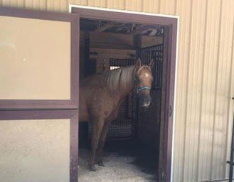 Stabling Services | Poughquag, New York | Legacy Stables