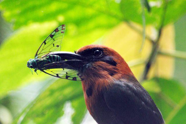 San Jose bird