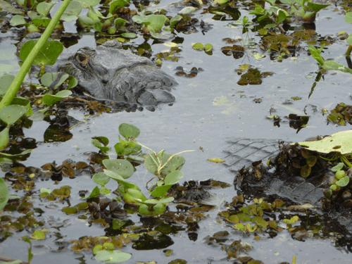 Ibera Marshes