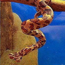 Snake at Kimz Pet Express in Princeton