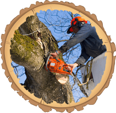 Tree surgery contractor