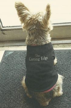 The Cutting Edge salon dog