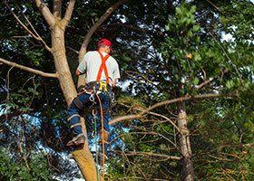 Tree Service Gastonia, NC