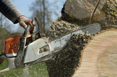 tree removal Gastonia, NC