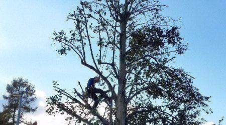 tree management service
