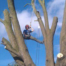 a tree cutter