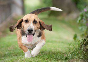 Pet grooming - Greenock, Renfrewshire - Top Tails Grooming Room - Dog