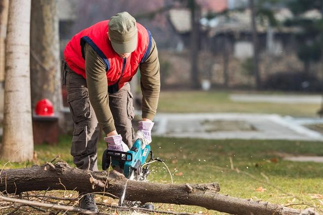 worker chainsawing a branch