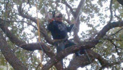 Tree Service San Antonio, TX